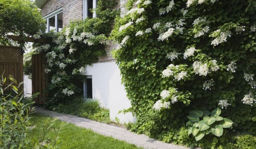 Decorate Your Home Exterior with Different types of Beautiful Vines